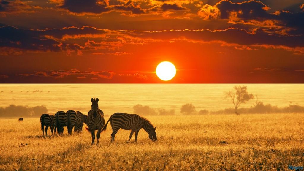 african_wildlife-1920x1080-1024x576